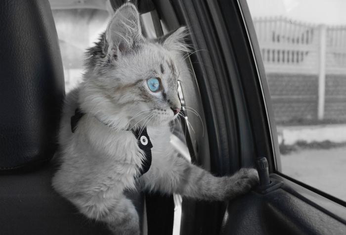 velká kočička mokrá krásné mokré kočička fotky
